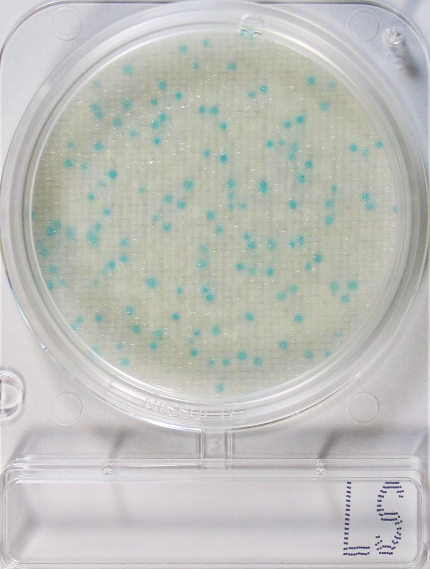 COMPACT DRY LS – Listeria spp